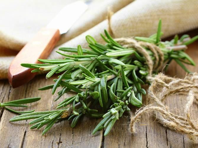 أعشاب طبيعية للتخلص من صداع الرأس